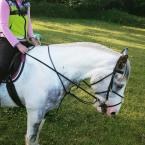 Andrea Bone - This is my special boy whose saved my life more times than I can remember ❤ I love the harry hall gold one club because of the amazing benefits ,support and savings for a brilliant price!