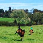 Clare Bruff - Love the one club for the very reasonably priced insurance cover :) Means I can ride both my girls without having to worry :)