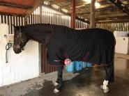 """Emily Culpeck - Chump loves his Protechmasta rug. I got it for him to wear whilst he was convalescing. We nicknamed them his """"hospital pyjamas"""""""