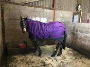 Emily Nicholas - Well we love are Masta rug so much we have the same one in different sizes thanks to HarryHall One Club as well as everyone having the best rugs and some of the best jodhpurs brilliant for the hours at the yard Thanks
