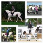 Gillian Miller - My mare Twinkle ✨ is a complete star