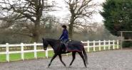 Jess Miles - This is my 16hh ISH that I'm currently rehabbing from back surgery. Since using the infrared products he has been going better than ever, keeping his back warm at all times! The Harry hall service is great and are always happy to help if it's needed. Absolutely love this company!