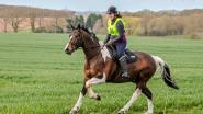 Karen Arlott - This is me and Codey on a recent pleasure ride - I love the One Club so I can buy him lovely pressies!
