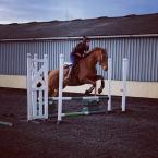 Kat Wiberg - I love the One Club. Knowing that my horse is covered for accidents and the cheeky 30% off is a bonus!!! This is me and my new boy Parlour Games (Eric).