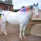 Lisa Hubbard - Love the One Club, the amazing discounts means we can spoil our pony Diago, after all he is a unicorn
