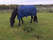 Pamela Crozier - My boy Barnaby and my girl Gem love the Harry hall club as they get so many treats from here, rugs, protect Masta and loads more, they are both very spoiled.