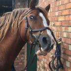 Rebecca Hewitt - Chester is a cheeky pony so having insurance in place is a must. Most of all we love the discounts on products