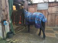 Su Heslop - My boy, Delby, modelling his new rug. He will be 21 in March.