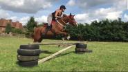 Tanita Bullen - I absolutely love the Harry Hall One Club!! My go to site whenever I need anything. My 29 year old girl especially loves the Mastacare garlic granules.