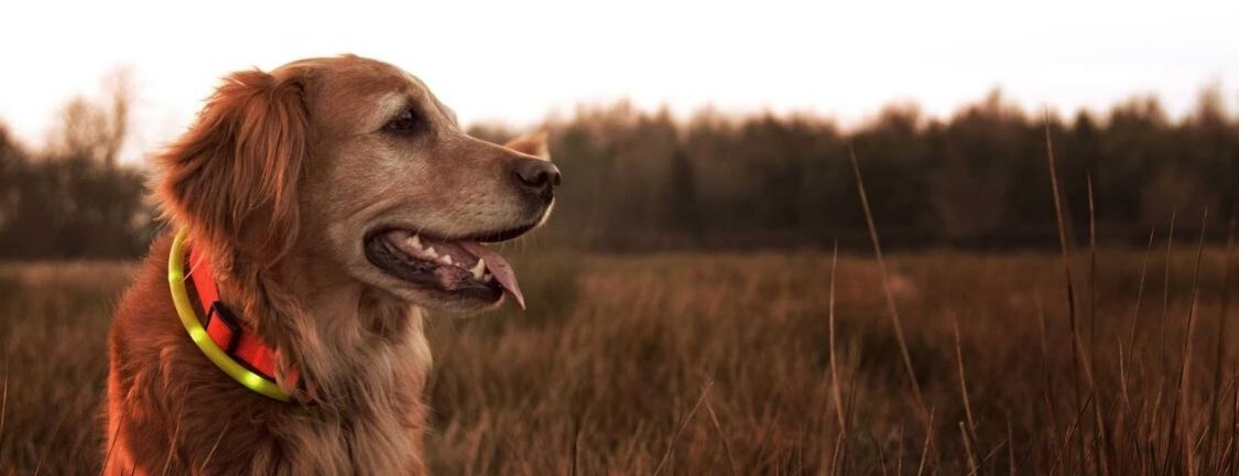 How to Master Animal Photography
