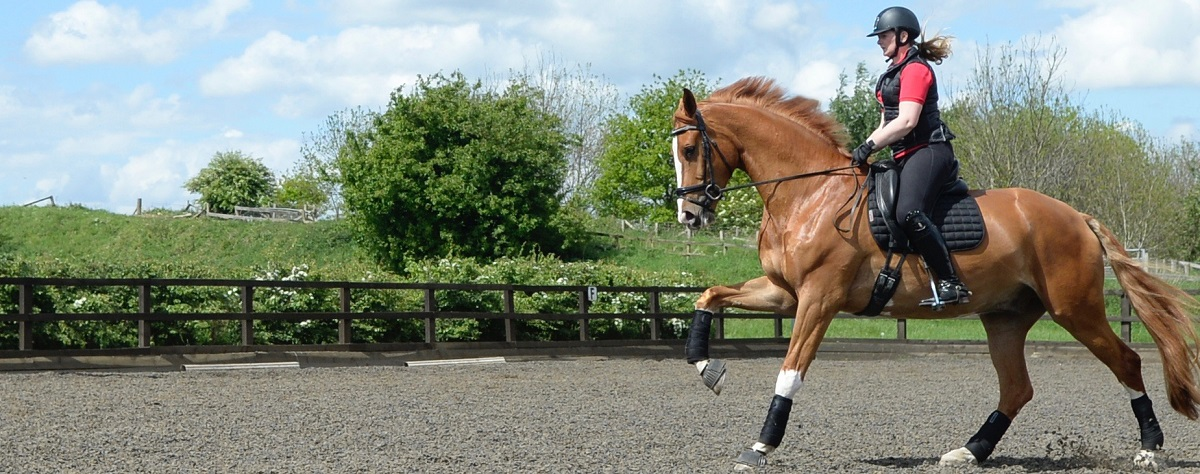 5 Exercises for Young Horses