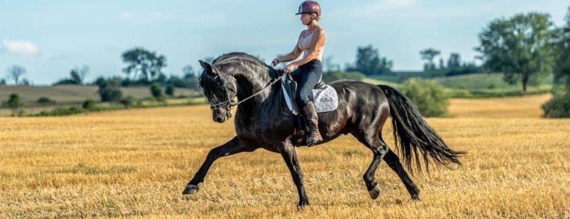 horses in films