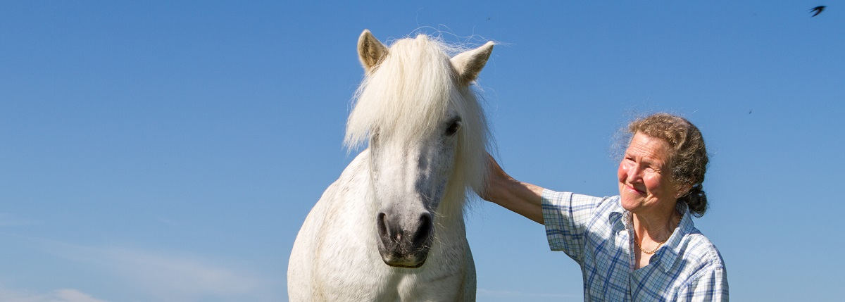 Getting a Companion Pony