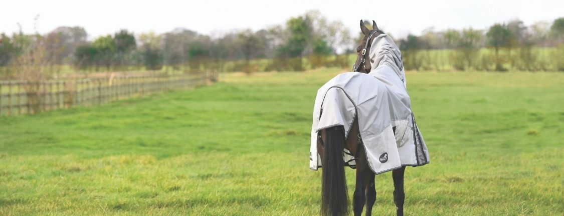 The ultimate guide to Horse rugs