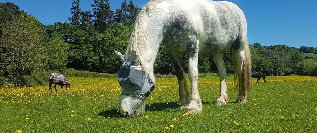 Horses and Poisonous Plants