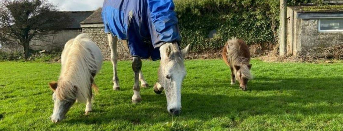 Respiratory disease in horses