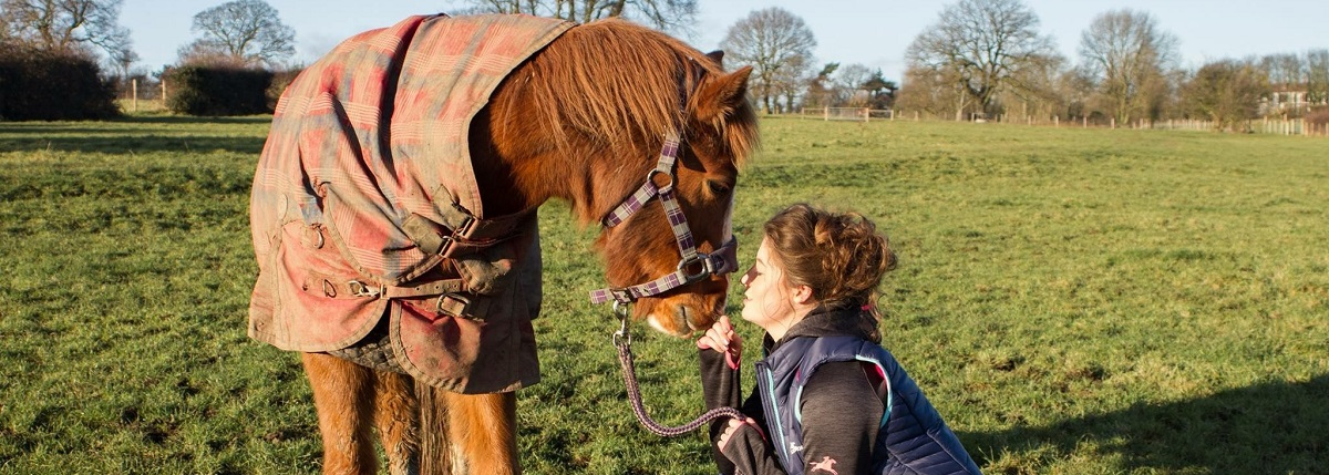10 Things All Pony Owners Know
