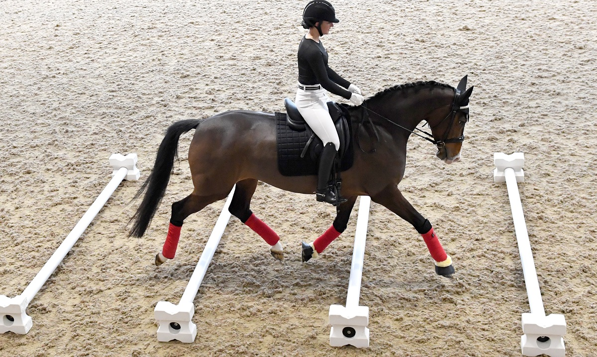 How does infrared therapy work on horses?