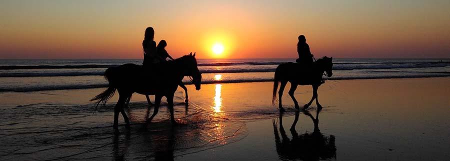 Equestrian Language