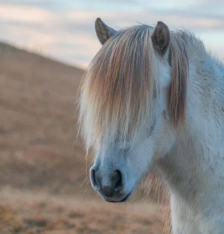Fluffy_pony