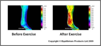 Horse temperature before and after exercise