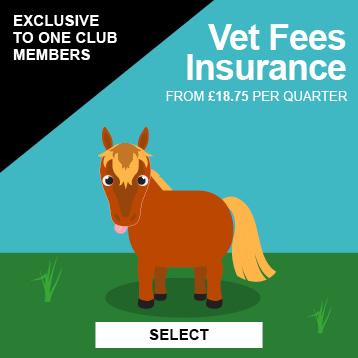 Vet Fee Insurance | Harry Hall