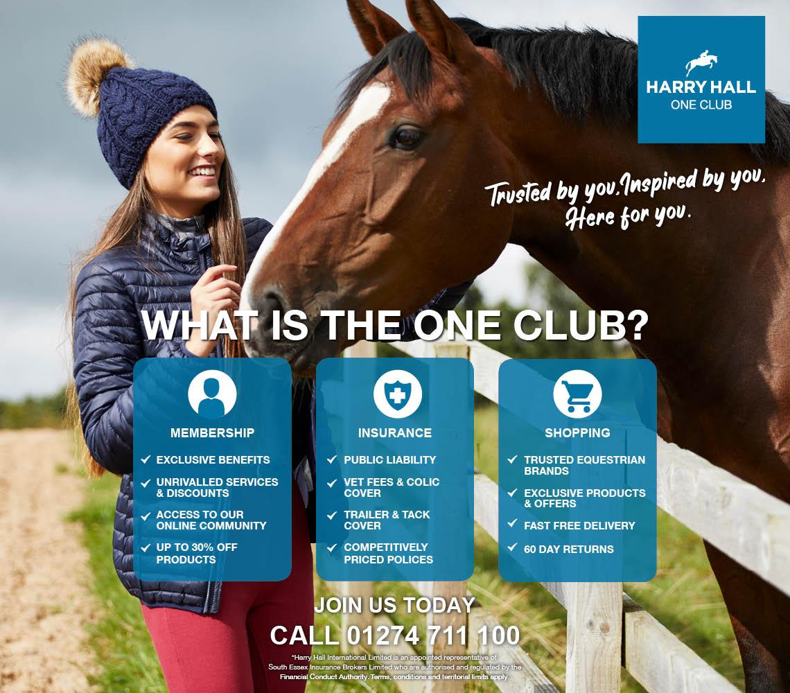 How Can You Help World Horse Welfare   Harry Hall