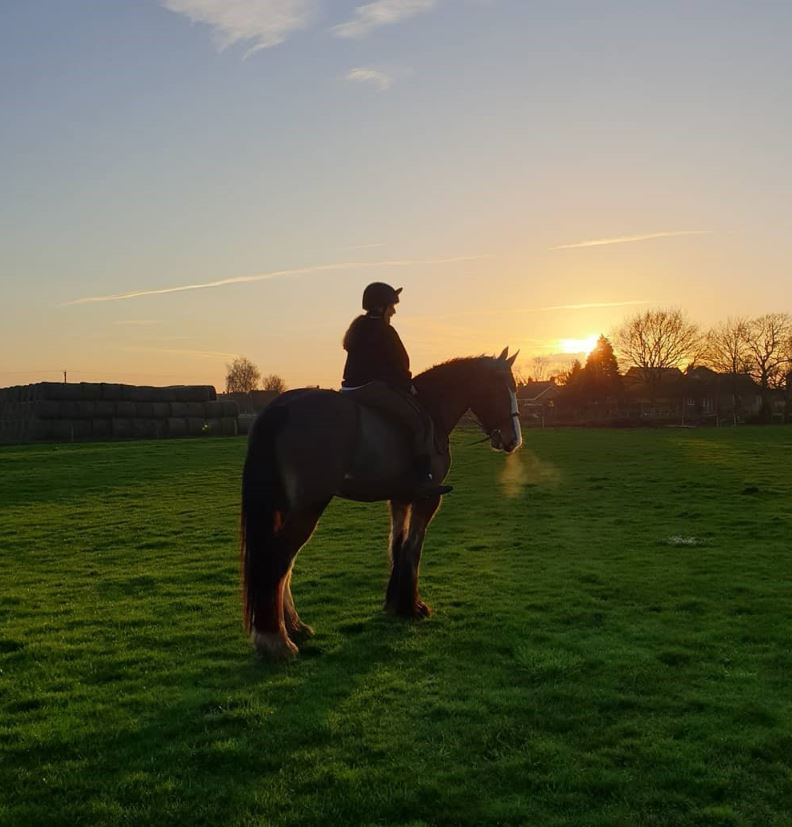 Heavyhorse blog