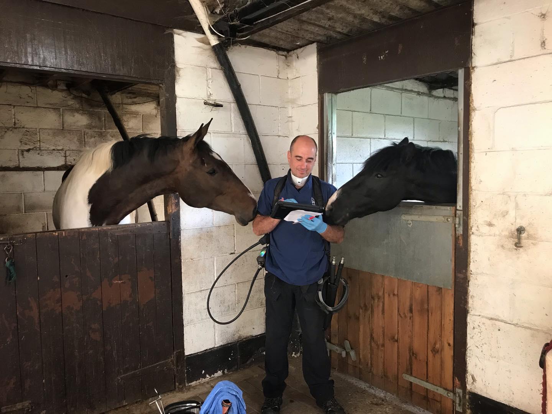 Equine Dentist Martin Brookes