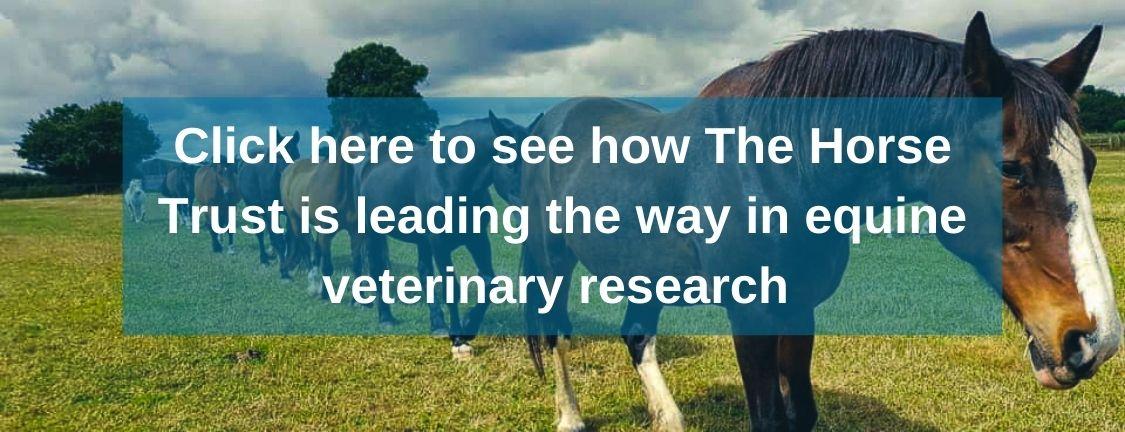 The Horse Trust