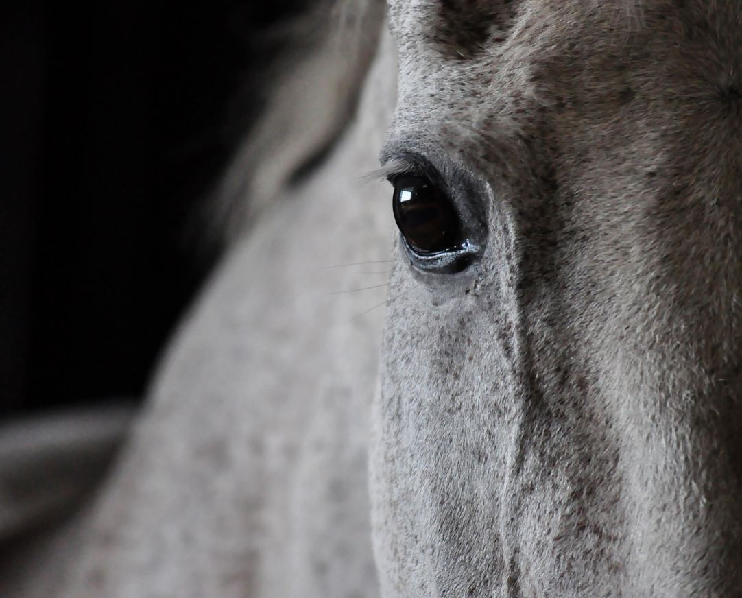 How to prevent horse colic