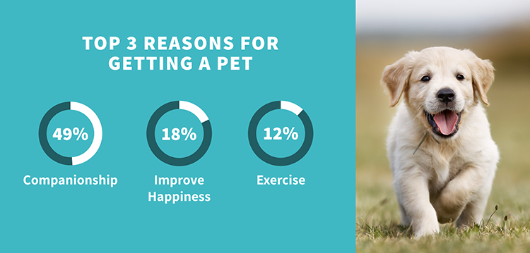 Top 3 Reasons for Getting a Pet | Harry Hall