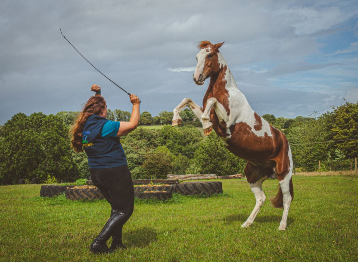 Natural Horsemanship UK