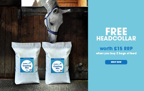 Free Headcollar when you buy two bags of feed | Harry Hall