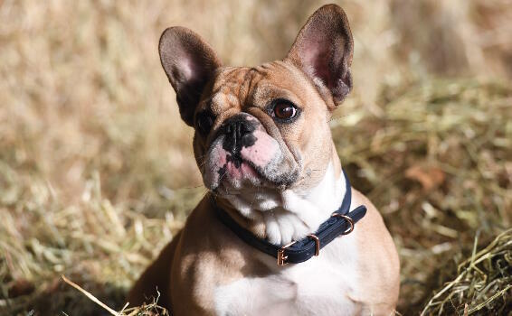 Shop collars and leads