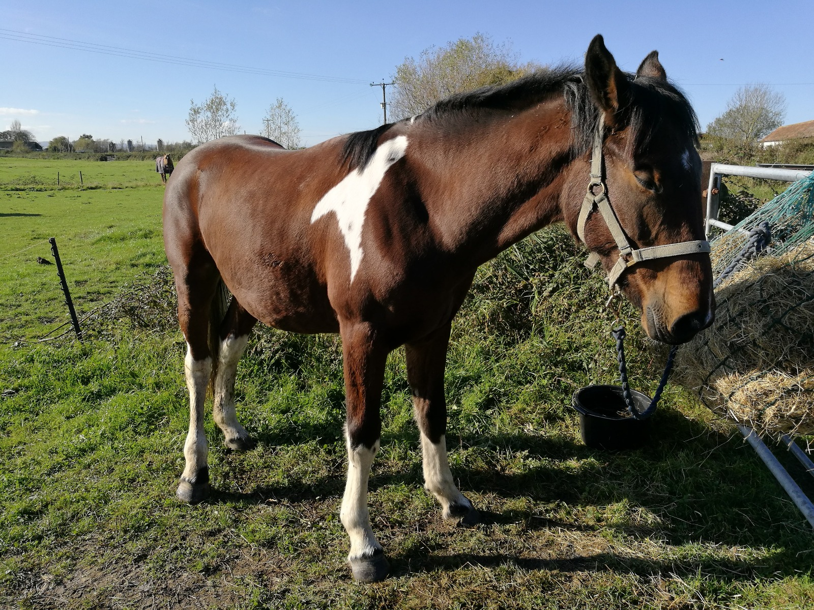 One Club member horse