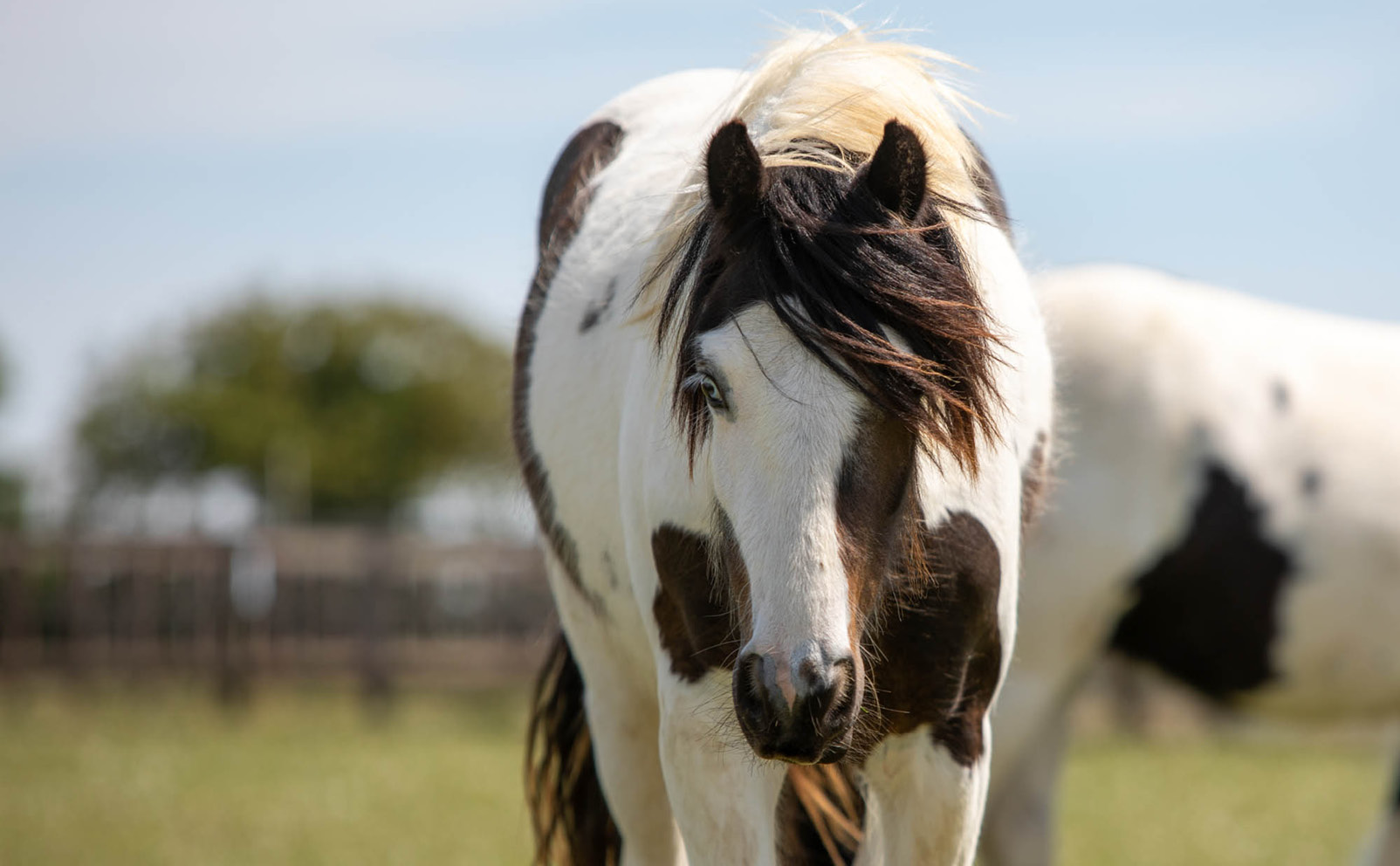 World Horse Welfare | Harry Hall's Charity Partner