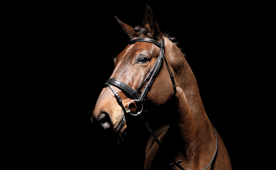 Shop Bridle| Harry Hall