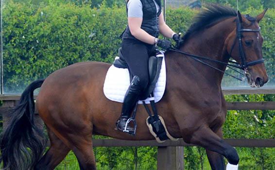 Jodhpurs | Rider Legwear at HarryHall.com