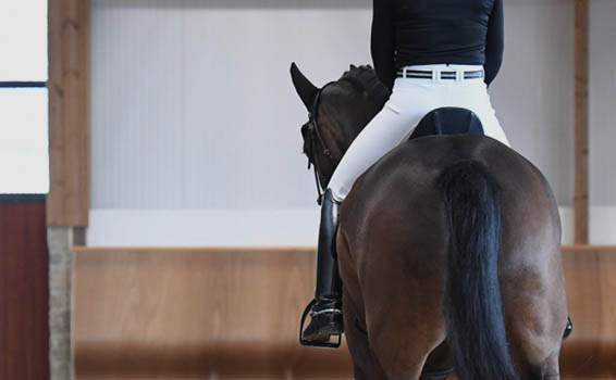 Competition Breeches | Rider Legwear at HarryHall.com