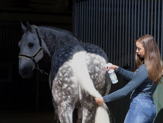 Horse Grooming| Mastacare Horse Grooming | Harry Hall
