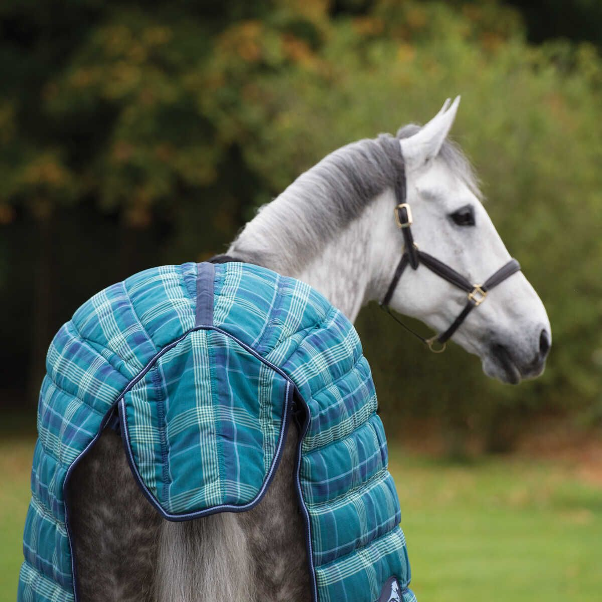 Quiltmasta 350g Stable Rug Blue