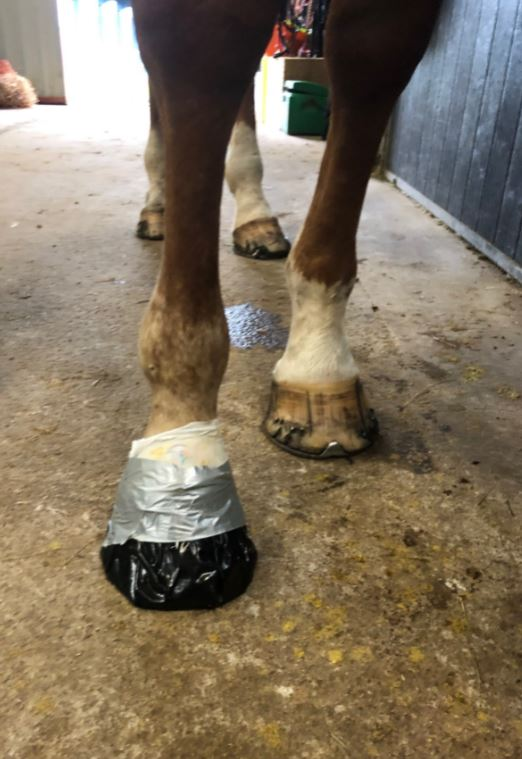 How to poultice