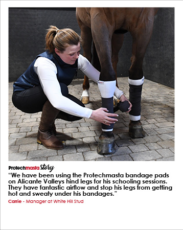 Protechmasta Story | Carrie, White Hill Stud