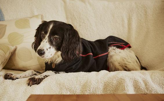 Shop Protechmasta Dog Products | Harry Hall