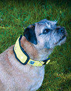 Hi Viz Flashing Dog Collar