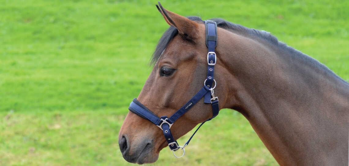 Head / Foal Collars