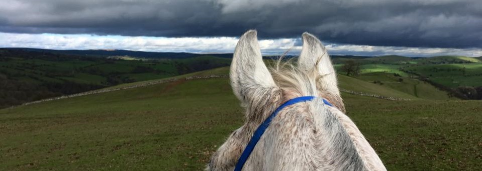 Horses, Studies & Work