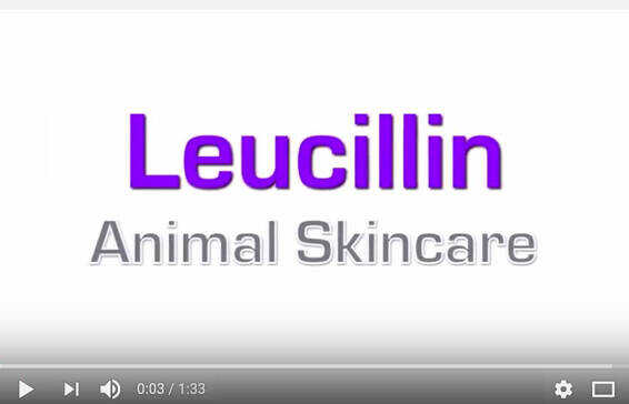 Leucillin - New In