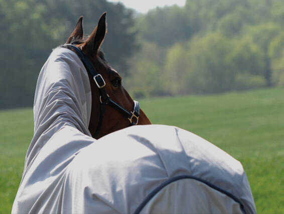Fight those Flies - Summer Horse Products